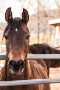 Horses Cool Off Easier with Windmill Ceiling Fans – Windmill